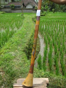 Didgeridoo Eukylaptus 2011-74 C