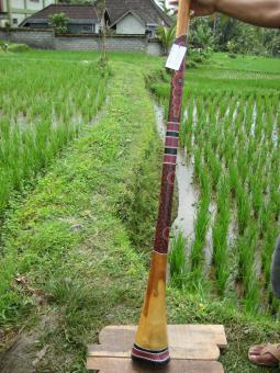Didgeridoo Eukalyptus 2011-89